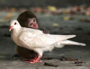обезьянка с птицей