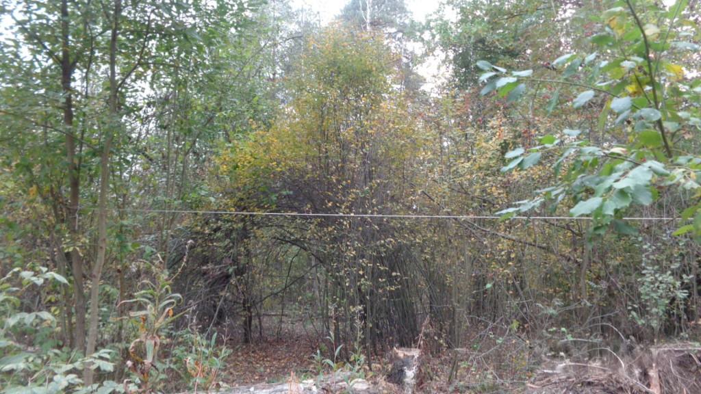 Передние  Врата лесного Храма